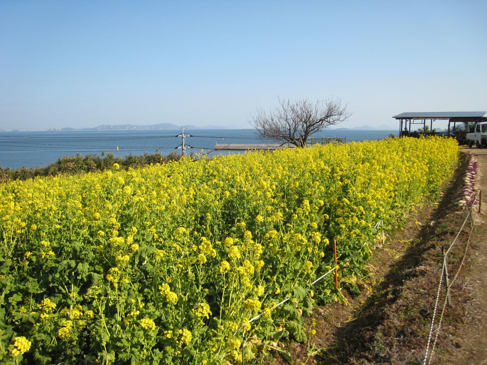 3月9日(日)の福山・尾道で開催されるイベントまとめ