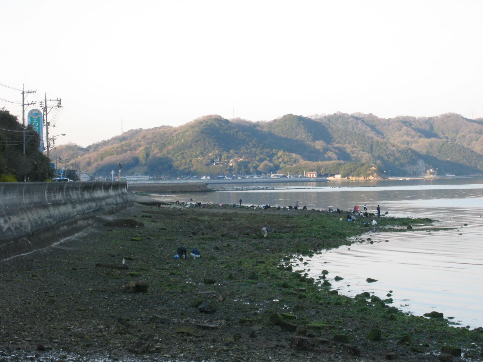 福山市田尻町で潮干狩り~アサリをあっさり獲る5つのコツ~