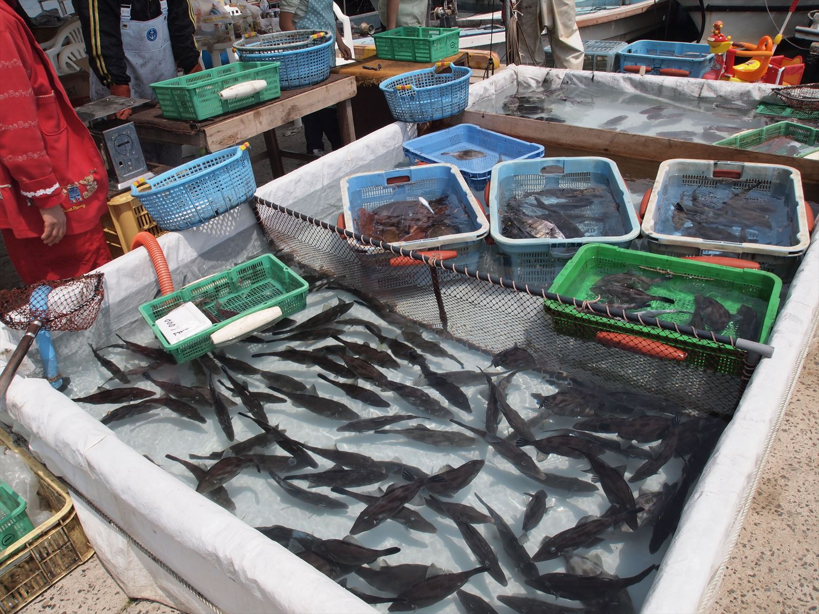 「うつみ大漁まつり」が福山市内海町の箱崎漁港で毎年5月3日に開催!~活魚・鮮魚販売、魚干物・珍味・特産物販売