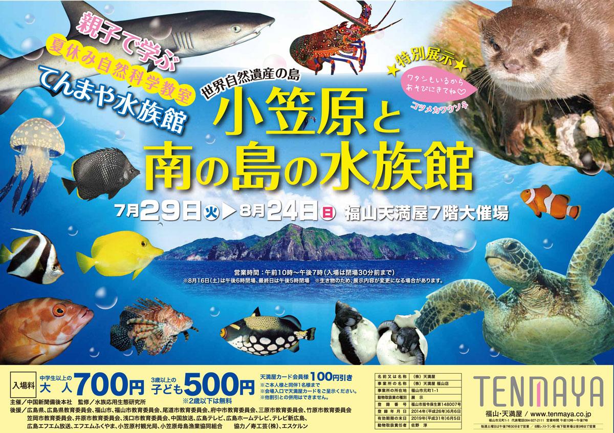 雨でも楽しめる夏のイベント「てんまや水族館~小笠原と南の島水族館~」